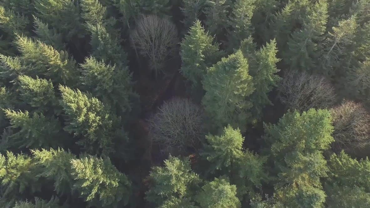 video_forest